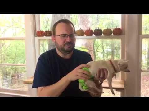 Pet Magasin Pet Diaper Review