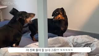 텐닥스VLOG - 룸메이트 다무&모찌 투닥투닥 …