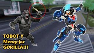 Tobot Y Mengejar Gorilla Sampai  ditangkap Polisi! WOW
