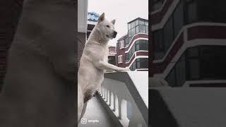 보자마자 시원해지는 영상…(feat.진돗개) #shor…