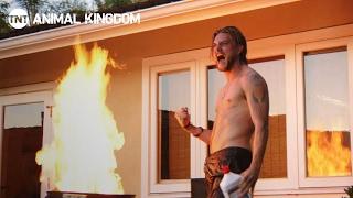�������� ���� Animal Kingdom: Stunts   Behind the Scenes   TNT ������