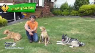 Denver Dog Training - The Best Denver Dog Training System In 2013
