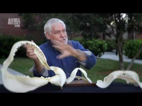 Shark Attack Files (ep3) / 1080p