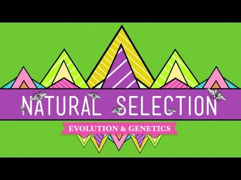 Natural Selection - Crash Course Biology #14