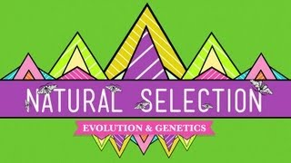 Natural Selection - Crash Course Biology #14(Hank guides us through the process of natural selection, the key mechanism of evolution. Crash Course Biology is now available on DVD!, 2012-04-30T22:06:43.000Z)