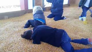 The boys burying their heads in corn like ostriches