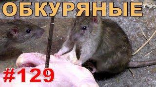 """#129. Реалити Шоу """"ALCARATZ"""". ДОМ 2 - Крысы. Обкуряные"""