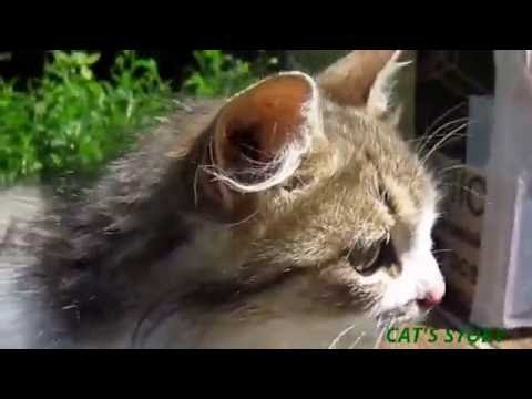 Funny Videos - Funny Cat - Cat Vines Compilation 2016