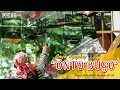 Lomba Burung Gaya Tarung  Ontobugo  Bikin Pria Ini Nekat Masuki Arena Lomba  Mp3 - Mp4 Download
