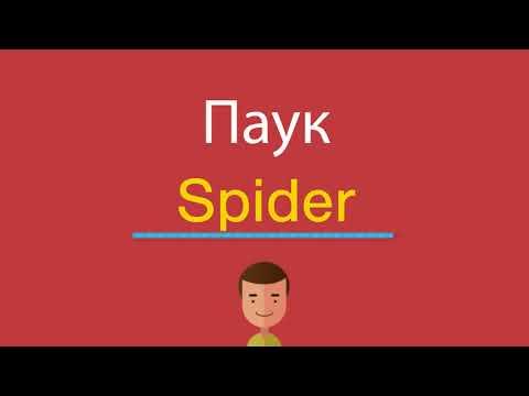 Как переводится слово spider