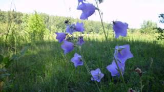 Цветы полевые  Песня из кинофильма  Стряпуха  монтаж ua9upk