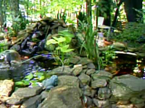 Goldfish pond youtube for Goldfish pond kits