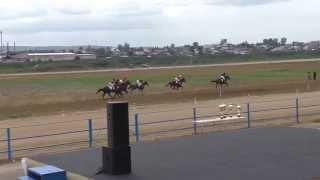 Скачка для лошадей 3 и стр. возраста-Емельяново 15.08.2015(Horse–Animal-racing-конь-смотреть-онлайн)