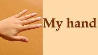 Части тела на английском языке. Пальцы рук.
