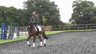 Dressage Preparation for Highclere Castle Horse Trials