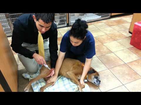 A Veterinary Neurological Exam