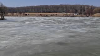 11 04 РК Фишка Данилово ледовая обстановка основного сектора ловля щуки с берега