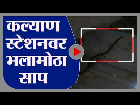 Kalyan   कल्याण स्टेशनवर सापडला घोणस जातीचा साप, प्रवाशांची धावाधाव -tv9