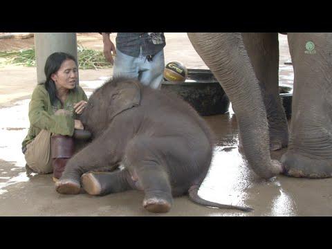 Happy 3rd birthday to baby elephant Navann