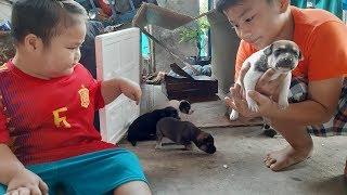 Đồ Chơi Trẻ Em Bé Pin Làm Nhà Cho Cún Con❤ PinPin TV ❤ Baby Toys Do Home Puppy