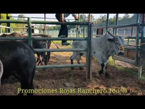 Plaza de toros Guadalajara de cleveland tx 6 may 17