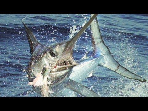 Finding Sustainable Fishing Methods