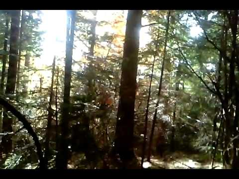 UKRAINE - TRIP TO CARPATHIAN MOUNTAINS - WILD MUSHROOMS - FOREST - NATURE