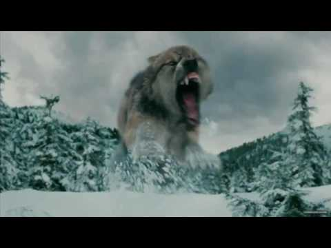 SETH CLEARWATER IN WOLF FORM - YouTube Twilight Wolf Pack Seth