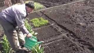 видео Зелёный салат «Всё с грядки»