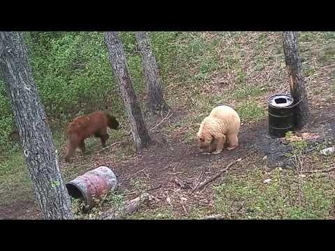 2018 Manitoba Bear Hunt