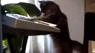 Funny cats & critters piano montage with Nora as guest star