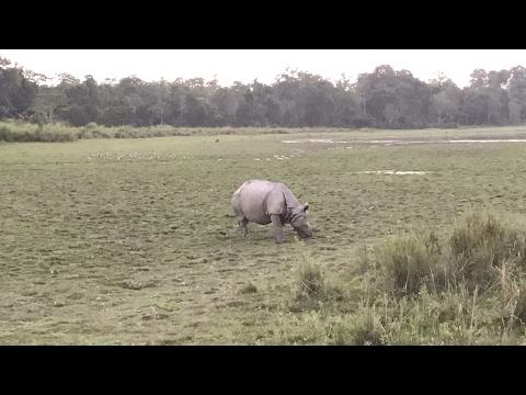 kaziranga Wildlife Sanctuary - National Park (Inside Safari Full Covered) UNESCO WORLD HERITAGE SITE