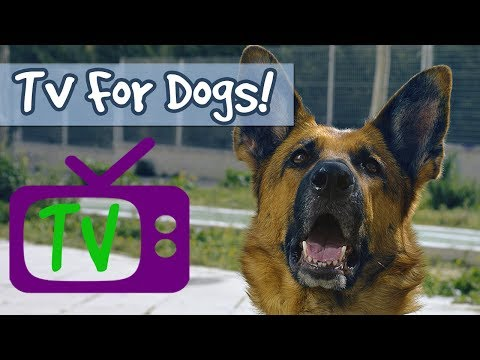 THE BEST TV FOR DOGS! Soothing Nature Footage With Calming Music To Relax Dogs and Promote Sleep🐶📺
