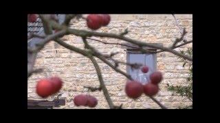 Kunradersteen | Kunradersteengroeve Voerendaal