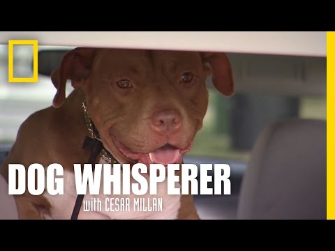 Doing the Right Thing | Dog Whisperer