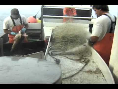 Gillnetting On The Dawn T. Documentary (Complete)