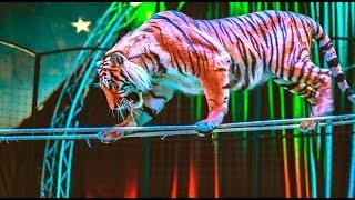 Лучшее цирковое шоу России - гастроли по Приморью! Цирк Демидовых! тигры клоуны львы экстрим-трюки
