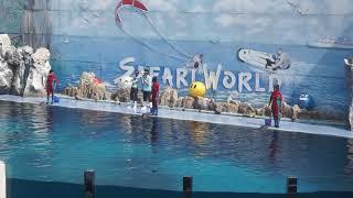 Dolphin Show @ Safari World, Bangkok, Thailand