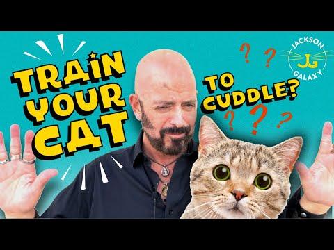 Great Catspectations