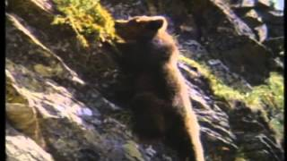 The Bear Trailer 1989