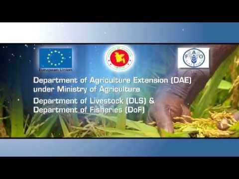 Food and Agriculture Organization (FAO)- Documentary