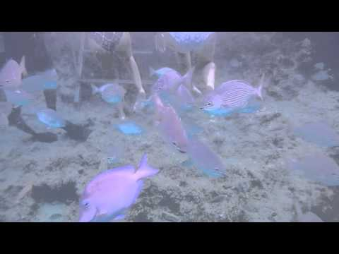 Nikon AW100. Buceo (scuba) Video In Piscinita (The Pool) San Andres