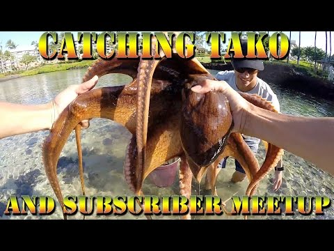 Hand Catching Octopus (Tako), and Fishing For Omilu With Subscribers In Hawaii - B.O.D.S. 20