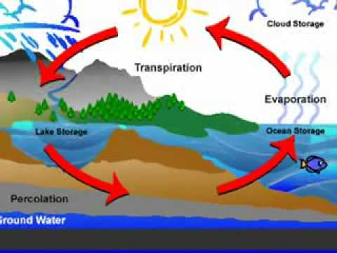 Plasmodium Life Cycle as well Nitrogen Cycle A On Your Handouts C Label The Parts Of The Cycle together with Water Cycle Diagram together with Phil Lores besides Efe. on label the diagram of water cycle