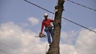 Экстремальный арборист Спиливание дерева на участке над проводами(Экстремальный арборист Спиливание дерева на участке над проводами Обрезка и удаление деревьев http://verhotura.com...., 2014-05-11T16:29:55.000Z)