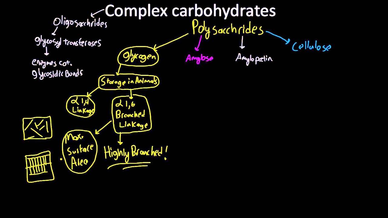 amylose  amylopectin  glycogen  and cellulose