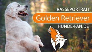 Golden Retriever [2018] Breed, Appearance & Character