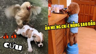 Cún con siêu quậy và đáng yêu #2 | Yêu Pets