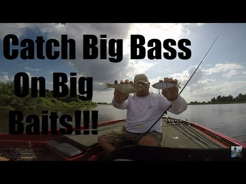 Bass Fishing: Glide Bait Tips and Techniques