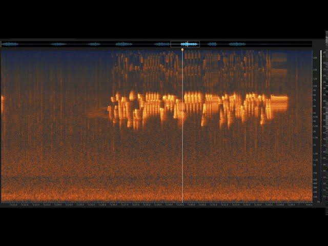 Pacific Wren: Santa Cruz Mountains, California | Spectrogram Follow